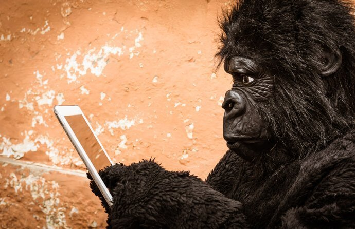 A gorilla on an Ipad